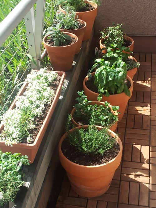 Freshly planted herbs on my porch