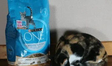 TipstoHelp You Monitor Your Cat's Body Condition