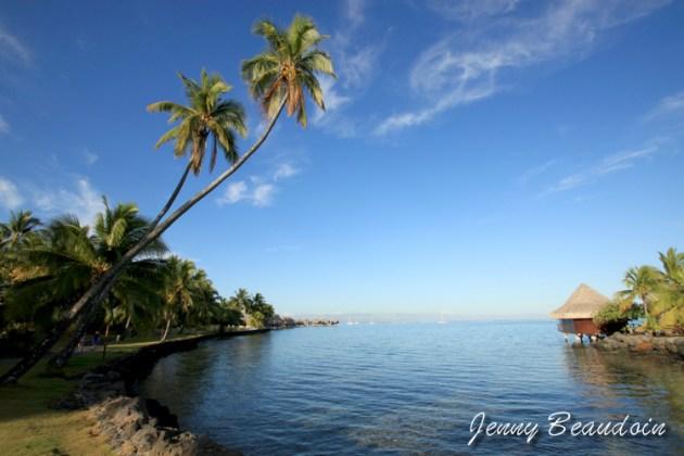 Palm Tree in Tahiti