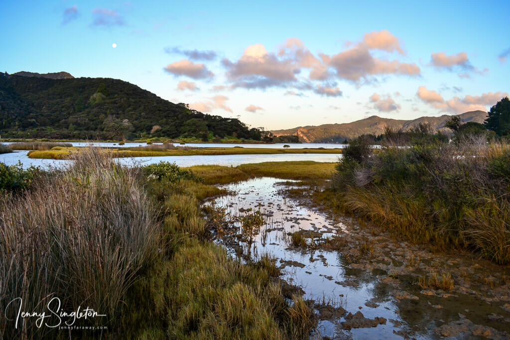 To get to Waikawau and the Matamataharakeke Track, you have to pass through Kennedy Bay with these beautiful bird-filled marshy areas.