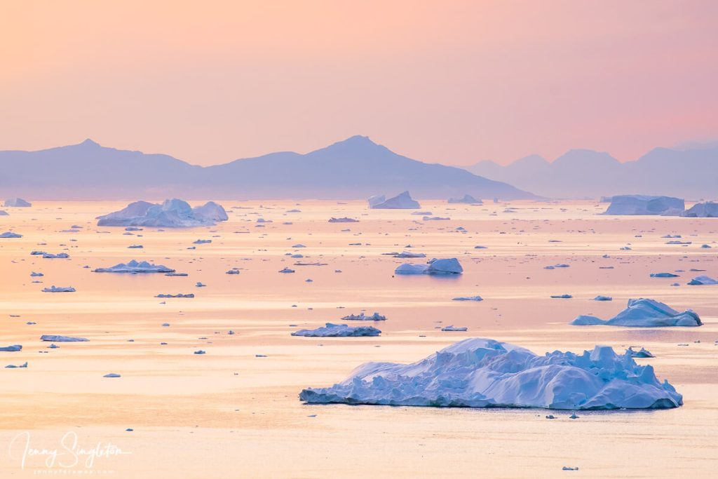 The pink sky is reflected in the sea dotted with blue icebergs, in Disko Bay, seen from the Yellow Trail in Ilulissat