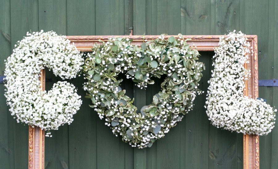 Image result for gypsophila letters