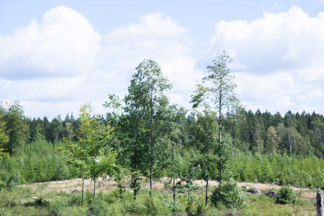 jennyjenny_skog2
