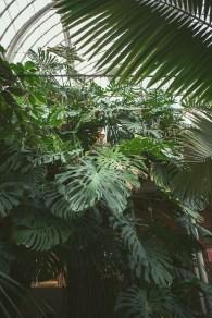 palmhuset-5