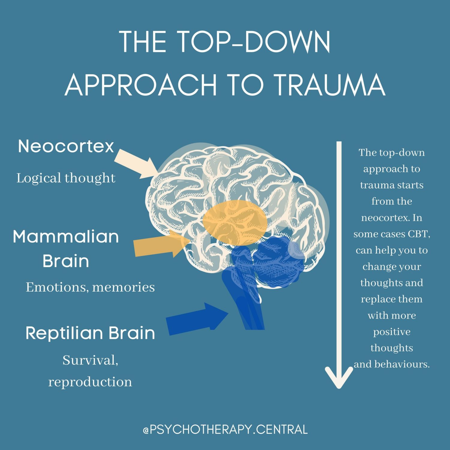 The-top-down-apprach-to-trauma