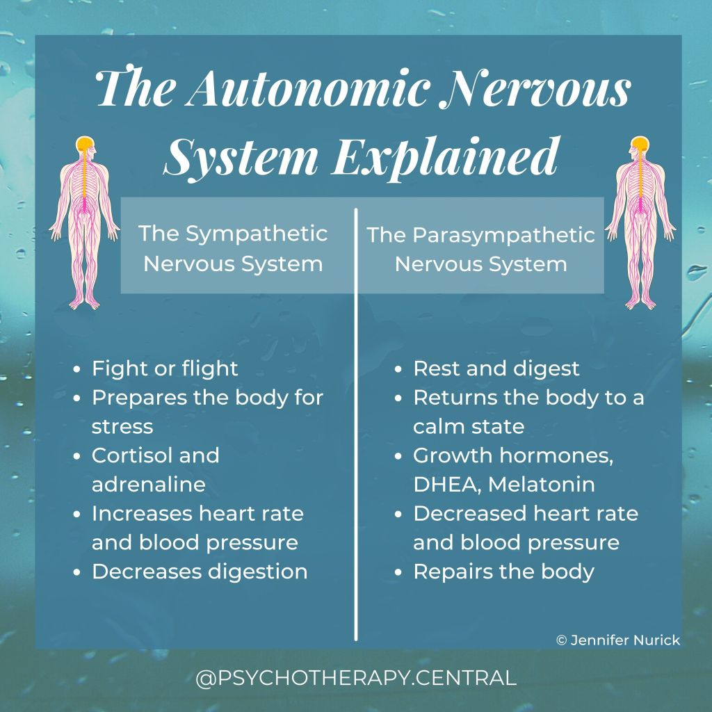 The Autonomic Nervous System Explained  Sympathetic   Fight or flight Prepares the body for stress Cortisol and adrenaline Increases heart rate and blood pressure Decreases digestion   Parasympathetic   Rest and digest Returns the body to a calm state Growth hormones, DHEA, Melatonin Decreases heart rate Repairs the body