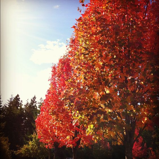 I love Fall.