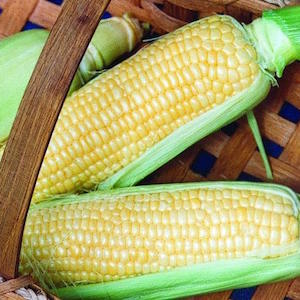 Incredible Corn