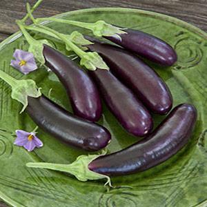 Hasel Eggplant