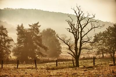 Morgendlicher Nebel