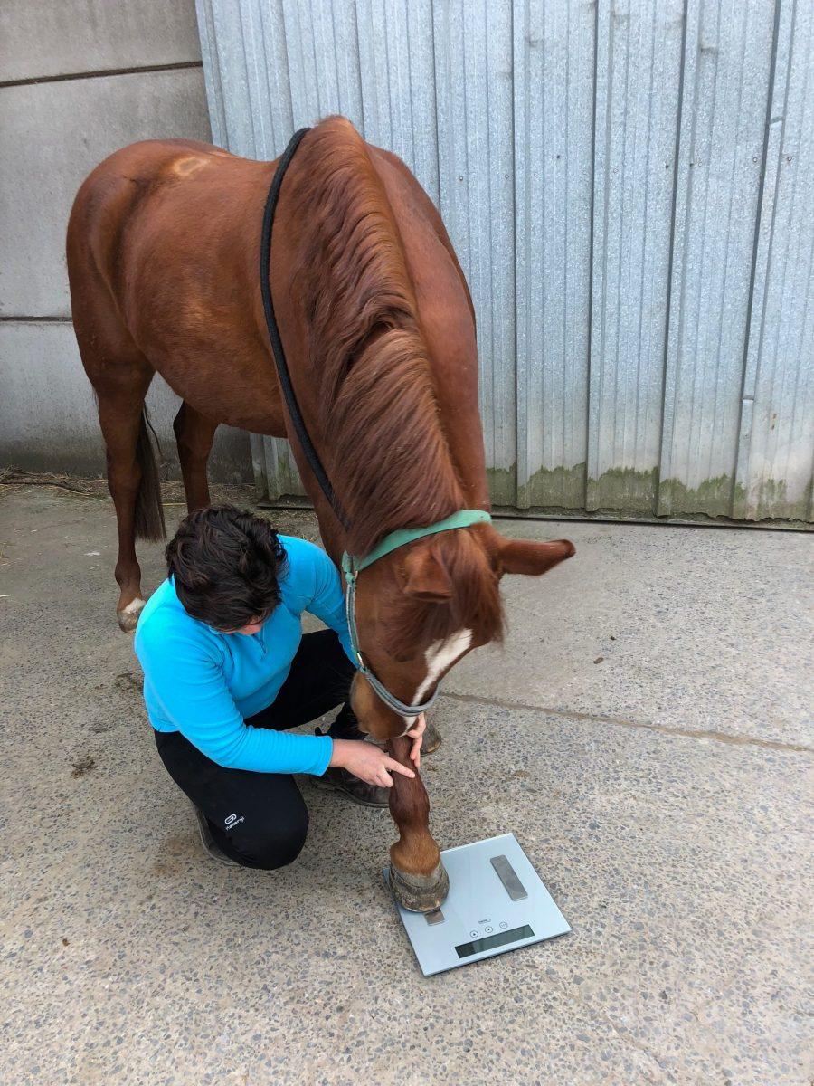 méthode peser un cheval poids cheval