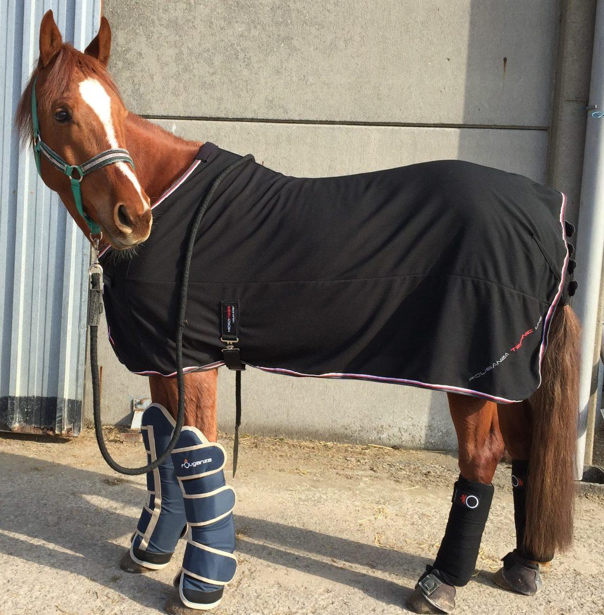 transport cheval protection embarquement van
