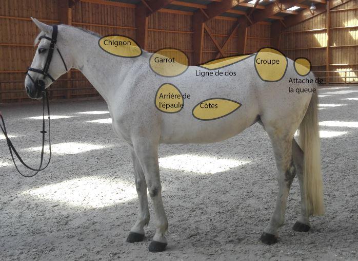 peser poids cheval état corporel zone stockage cheval