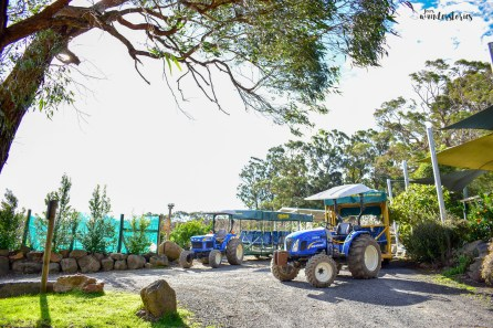 The tractors that took us around the orchard