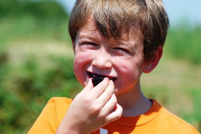 Little Boy Eating Blackberries