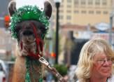 Llama and Lady