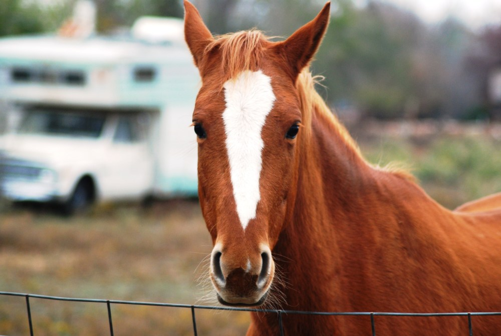 A horse at a fence with a camper in the yard.