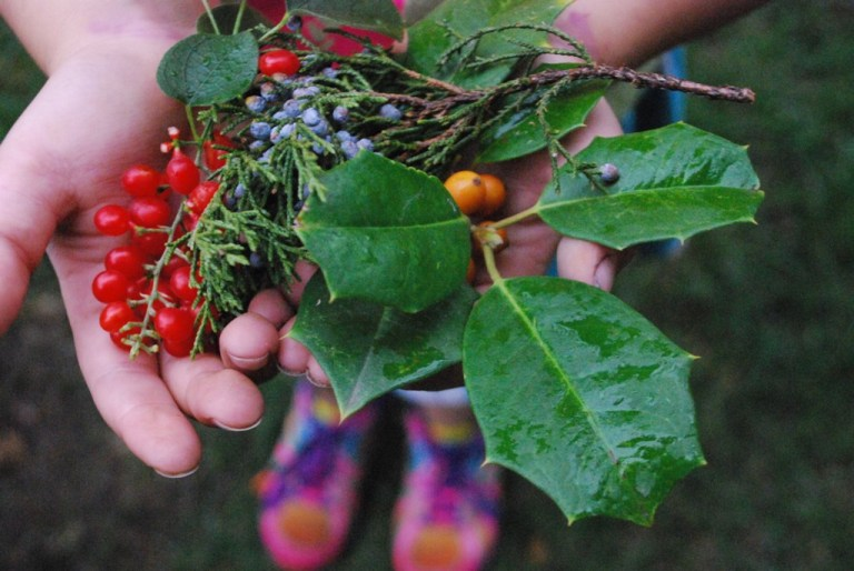 Autumn Colors Red Berries, Orange Berries, Blue Juniper Berries