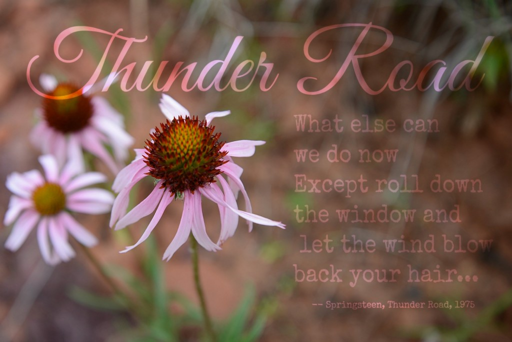 Thunder Road Lyrics Gallardia Wildflowers Oklahoma
