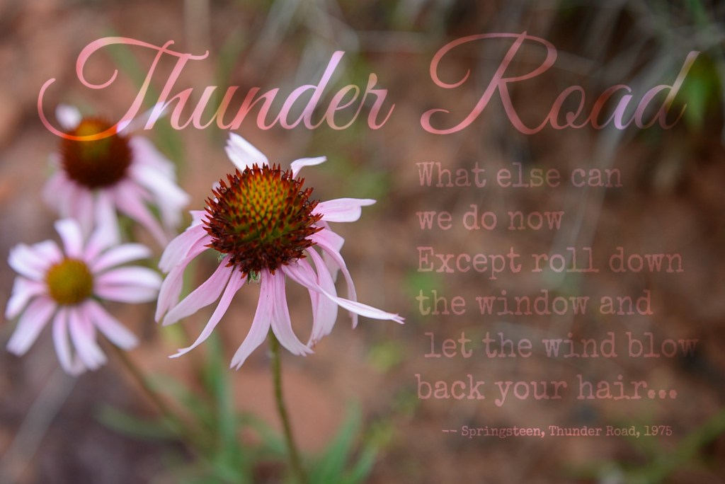 Thunder Road Lyrics Gallardia Wildflowers Oklahoma