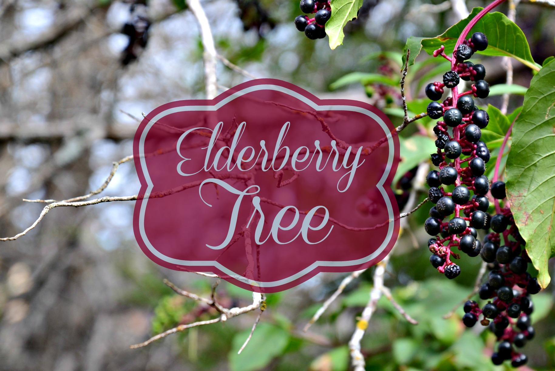 Black Berries Red Vines Elderberries