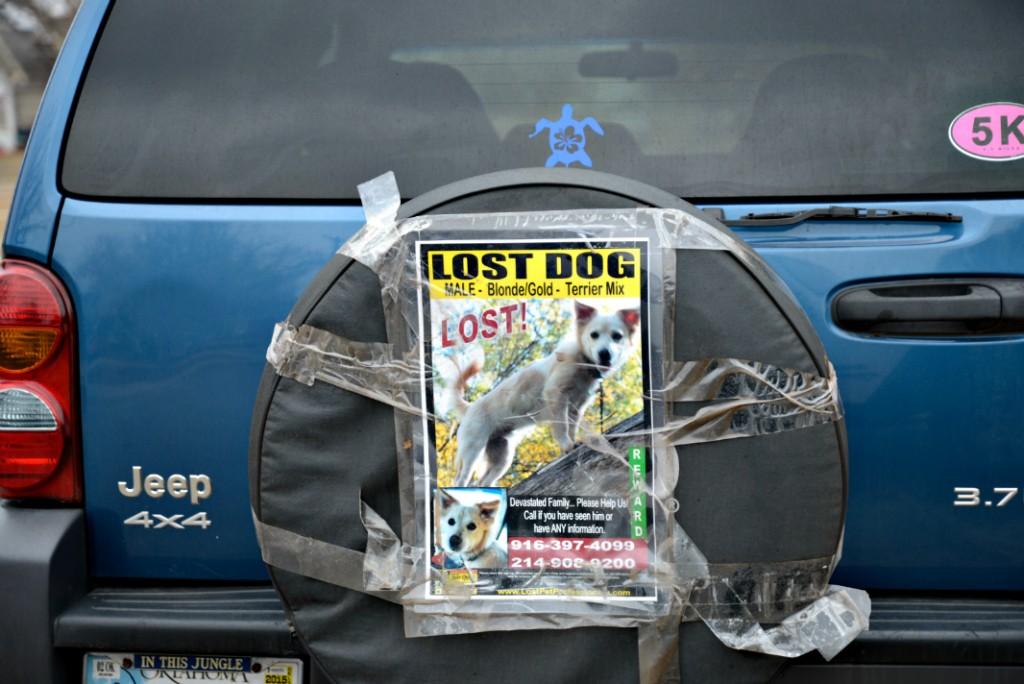 Lost Dog Pet