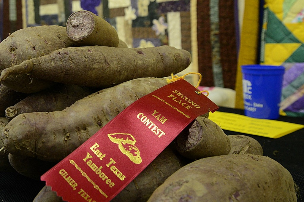 Yam Growing Contest County Fair