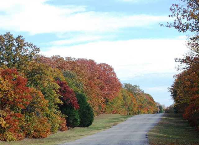 Beautiful fall trees along a road at Lake Thunderbird