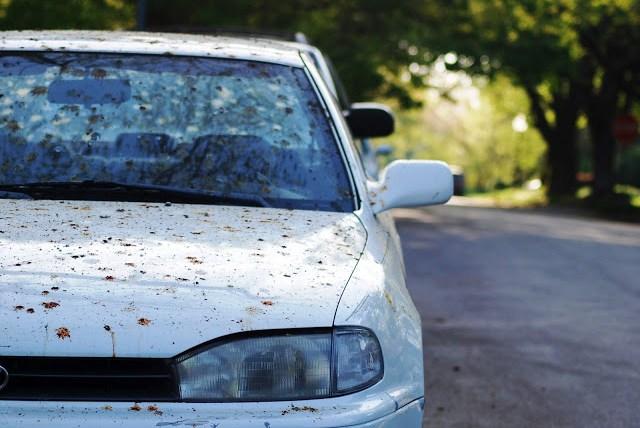 Car covered in bird poop