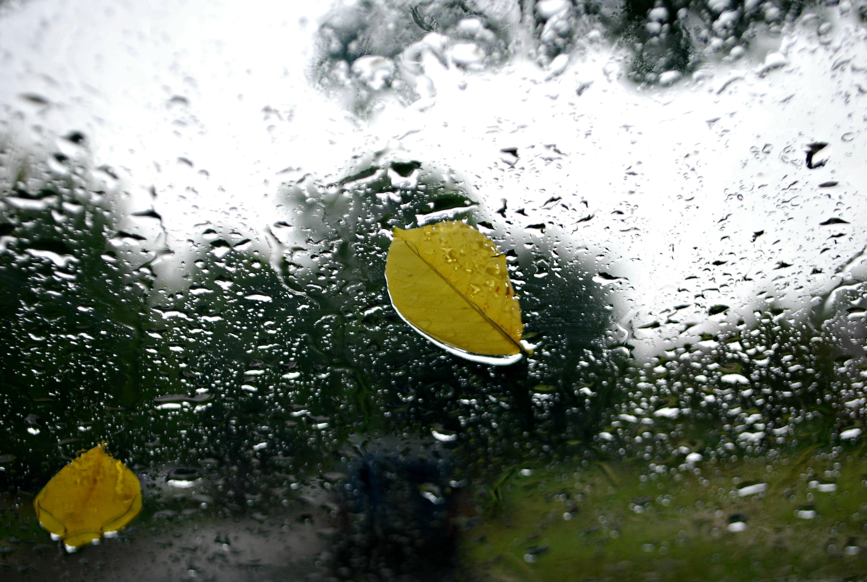 Leaf on Window in the Rain