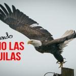 Viviendo Como Las Águilas