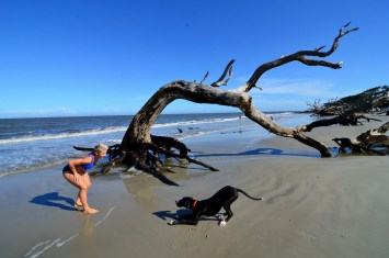 Driftwood Beach at Jekyll Island42