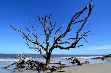 Driftwood Beach at Jekyll Island9