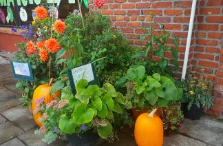 Dahlias, pumpkins, and plants