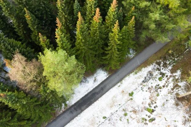 Elp, 2019 | Iberenplas Boswachterij Grolloo