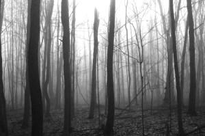 Oriskany Battlefield-woods