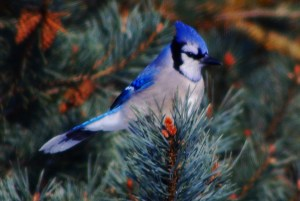 Blue-Jay-Way