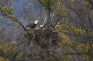 Eagles-nest-03-16