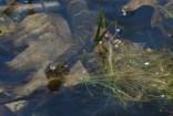 Black Water Snake 2