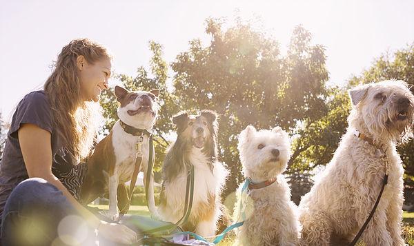 walking-dog-pet-care