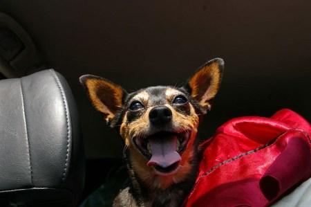 Happy Dawg