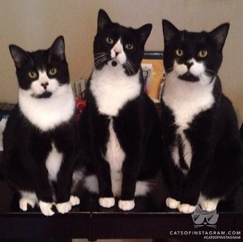 The Tuxedo Trio