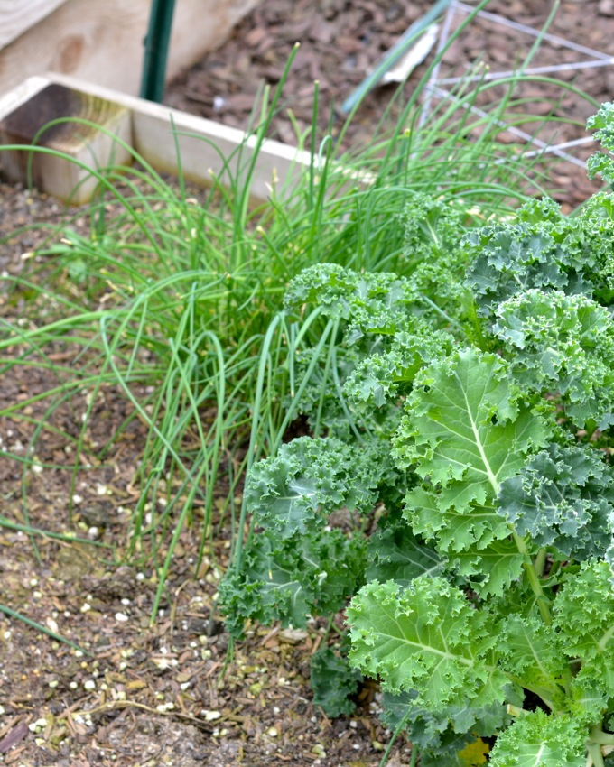 Chives and Kale