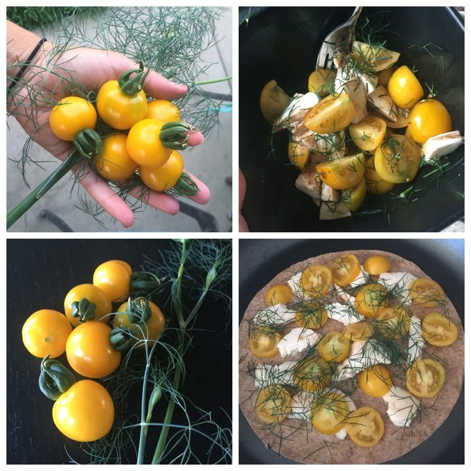 Garden Tomatoes and Dill