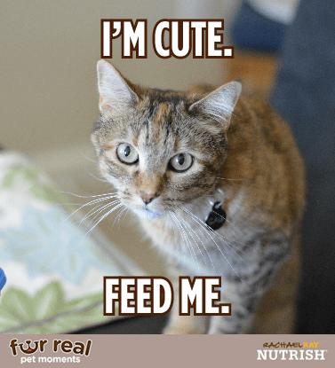 Fur Real Pet Moments