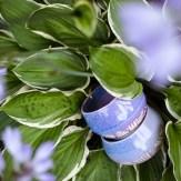 Jessica Lily Ceramics - Purple Bowls