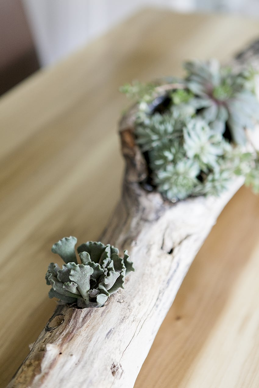 DIY Succulent Driftwood Centerpiece | DIY Projects | DIY Home Decor | DIY Deco | Jessica Brigham Magazine Ready for Life