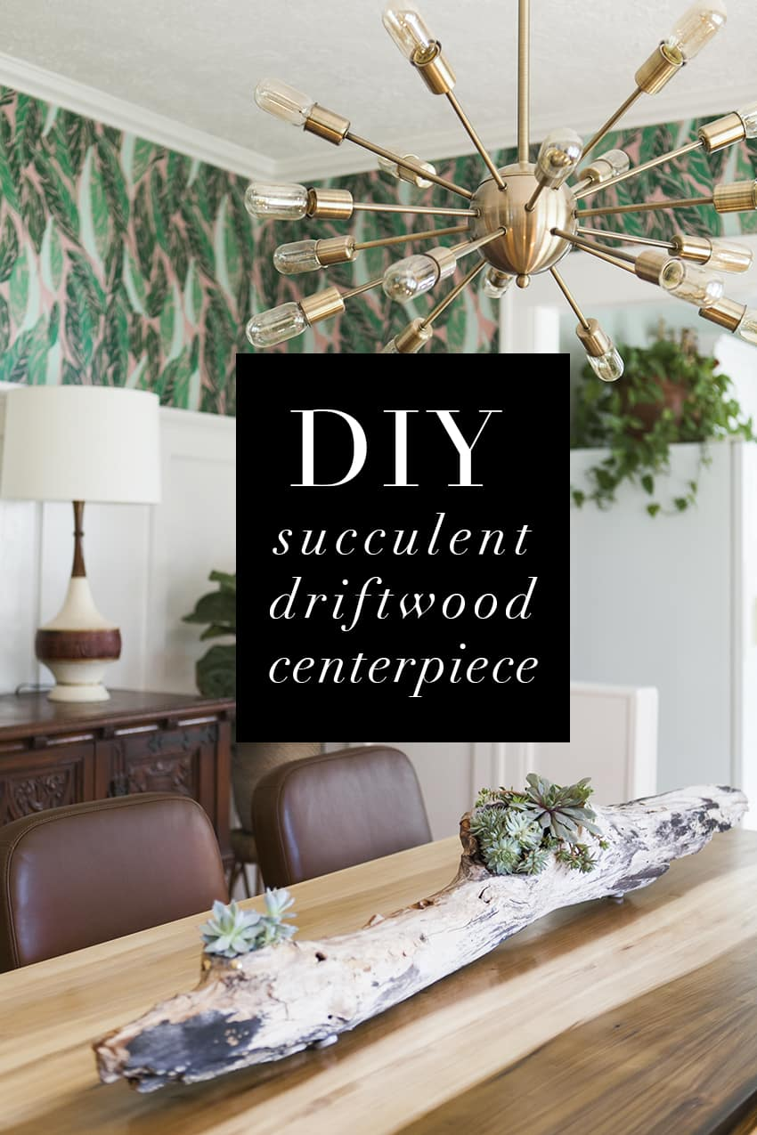 Diy driftwood succulent centerpiece jessica brigham diy succulent driftwood centerpiece diy projects diy home decor diy deco jessica teraionfo
