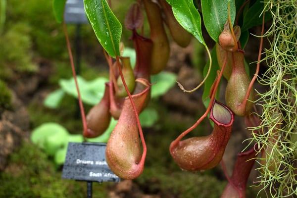 10 Non Toxic Houseplants That Won't Kill Pretty Kitty | Pitcher Plant | Common House Plants | Jessica Brigham | Magazine Ready for Life