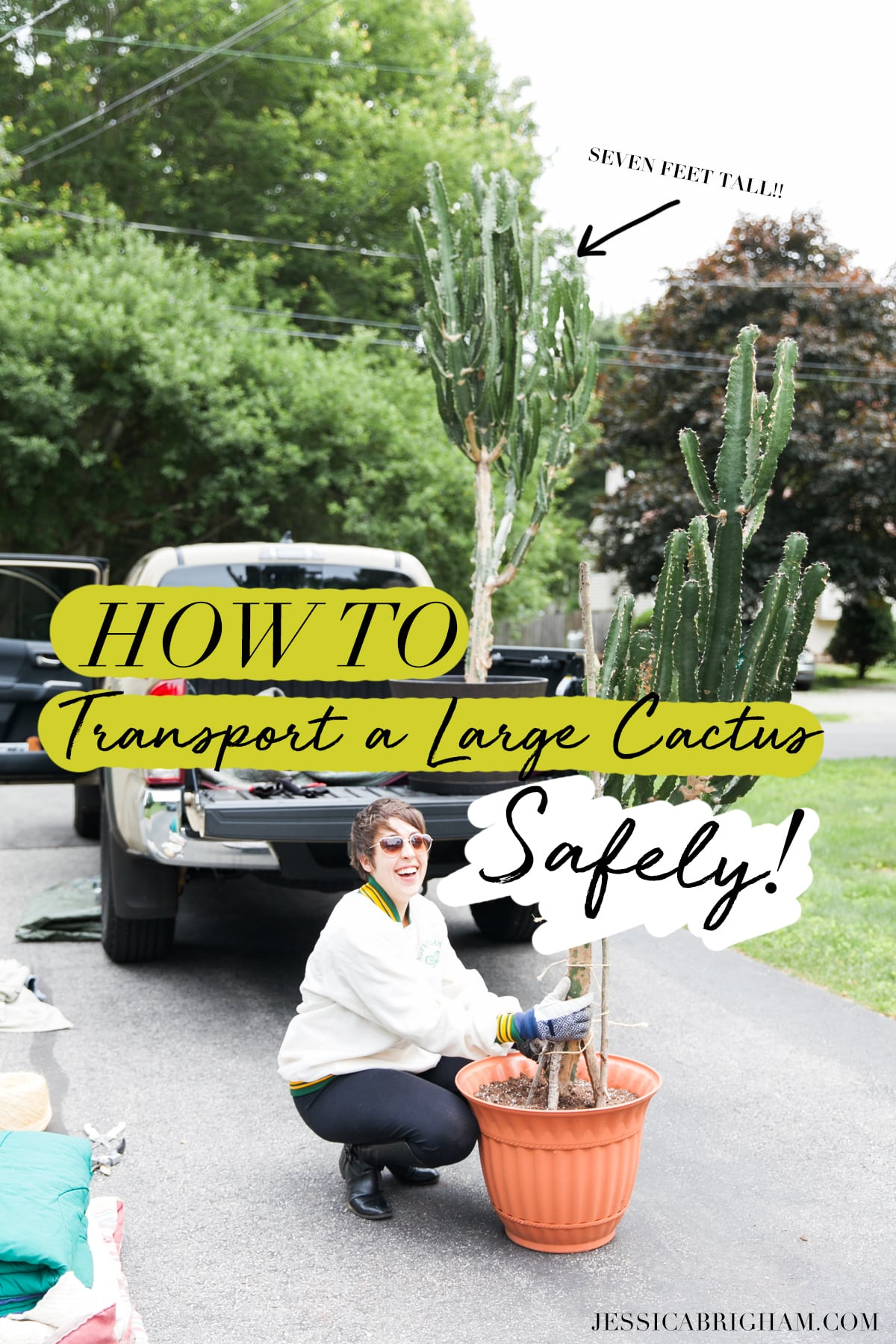 How to Transport a Large Cactus Safely | Long Distance Cactus Transport | How to Move Big Cactus | Jessica Brigham | Magazine Ready for Life